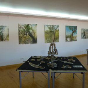 Exposition Chêne Liège